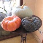 SEIHO OMBRAGE – 四季を感じるブログ集